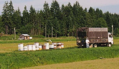 We went from being the proud owner of about 50 hives to over 200 hives and started our first year providing hives for Commercial Pollination.